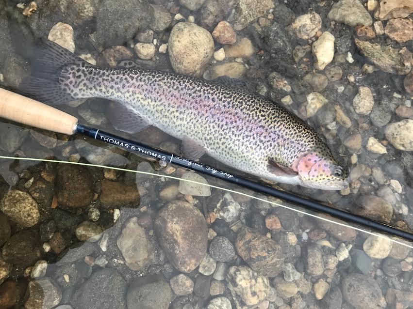 Deerfied river fishing report 4 17 17 deerfield fly shop for Deerfield river fly fishing